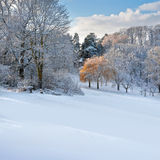 Первый снежок в парке. Стоковые Фото