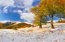 Первый снежок в пуще Стоковое Изображение RF