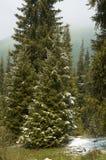 первый снежок горы пущи Стоковое фото RF