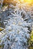 первый снежок гор Стоковые Изображения RF