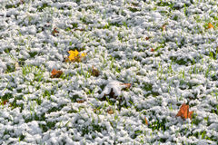 Первый снежок. Предпосылка листьев осени. стоковые изображения