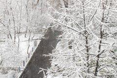 первый снежок Снег шелушится в воздухе Белые ветви на деревьях Зима Стоковое фото RF
