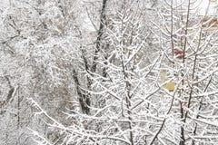 первый снежок Снег шелушится в воздухе Белые ветви на деревьях Зима Стоковые Фото