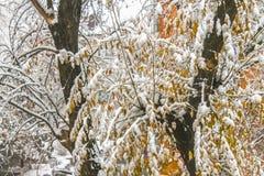 первый снежок Снег шелушится в воздухе Белые ветви на деревьях Зима Стоковое Изображение RF