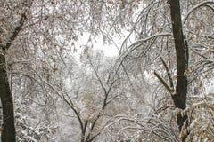 первый снежок Снег шелушится в воздухе Белые ветви на деревьях Зима Стоковые Изображения