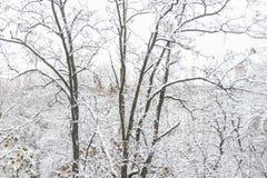 первый снежок Снег шелушится в воздухе Белые ветви на деревьях Зима Стоковые Изображения RF