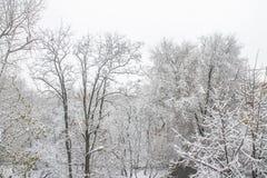 первый снежок Снег шелушится в воздухе Белые ветви на деревьях Зима Стоковая Фотография RF