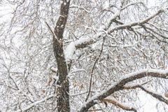 первый снежок Снег шелушится в воздухе Белые ветви на деревьях Стоковое фото RF