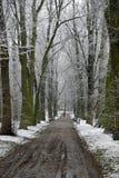 первый снежок Стоковое Изображение