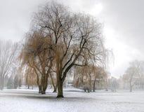 первый снежок Стоковое Изображение RF