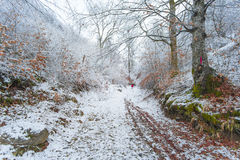 первый снежок Стоковая Фотография