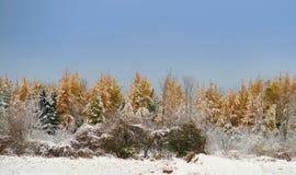 первый снежок Стоковые Изображения