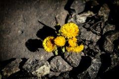 первый цветок Стоковая Фотография
