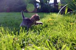 Первый шаг для того чтобы открыть теплую, солнечную траву стоковая фотография rf