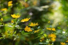 Первыми предпосылка весны леса запачканная цветками стоковая фотография rf