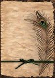 Пергаментная бумага и перо Стоковое фото RF