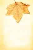 пергамент листьев рамки осени Стоковая Фотография RF