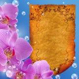 пергамент орхидеи бесплатная иллюстрация