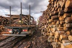 Перевезите древесину на грузовиках загрузки в внешнем складе древесины сосны стоковая фотография
