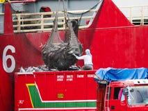 Перевезите тунца на грузовиках загрузки в городе Gensan, Филиппинах стоковые фотографии rf
