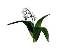 перевод 3d куста цветка изолированный на белизне можно использовать для fo Стоковая Фотография