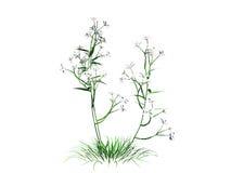 перевод 3d куста цветка изолированный на белизне можно использовать для fo Стоковое Изображение