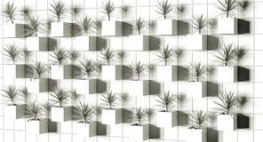 перевод 3d Succulents на стене Стоковая Фотография RF