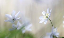 Переговор полевого цветка стоковые изображения rf