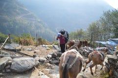 Перегруженное Sherpa Стоковое Изображение