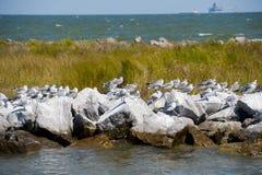 Передвижной залив на острове дофина Стоковое Фото
