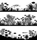 передние планы коралла Стоковая Фотография RF