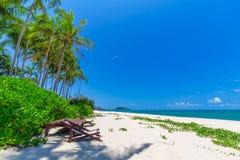 Передний план шезлонга и пальм на тропическом пляже, остров рая на праздники и релаксация стоковое фото rf