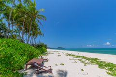 Передний план шезлонга и пальм на тропическом пляже, остров рая на праздники и релаксация стоковые фотографии rf