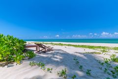 Передний план шезлонга и пальм на тропическом пляже, остров рая на праздники и релаксация стоковые фото