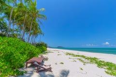 Передний план шезлонга и пальм на тропическом пляже, остров рая на праздники и релаксация стоковое изображение rf