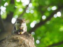 Передняя грань белки на дереве есть фасоли Оно ` s малое и милое Стоковые Изображения