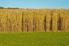 переключатель травы Стоковое фото RF