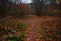 Перекрестки леса осени стоковое фото