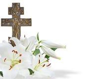 Перекрестная и белая лилия Стоковое Изображение