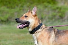 Перекрестная собака породы стоковые фотографии rf
