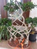 Перекрестное дерево Стоковое Изображение RF