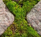 перекрестный мох Стоковые Фото