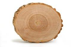 перекрестный раздел годичных колец показывая ствол дерева Стоковое фото RF