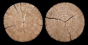 перекрестный раздел годичных колец показывая ствол дерева Стоковые Изображения