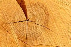 перекрестный ствол дерева раздела сосенки Стоковые Изображения RF