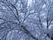 Перекрытие ветвей с снегом Стоковые Изображения