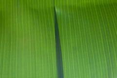 Перекрытие листьев зеленого цвета банана Стоковая Фотография RF