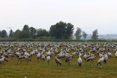 Перелетные птицы в птичьем заповеднике Hula стоковое фото