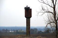 Перелётные птицы Аист весной Стоковое Изображение