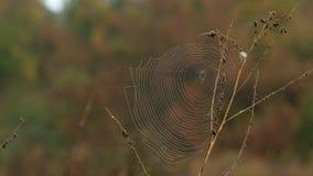 Перемещаться на сухую траву Стоковые Фото